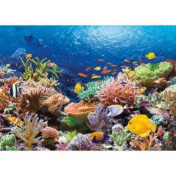 Pussel 1000 bitars, Coral Reef Fishes
